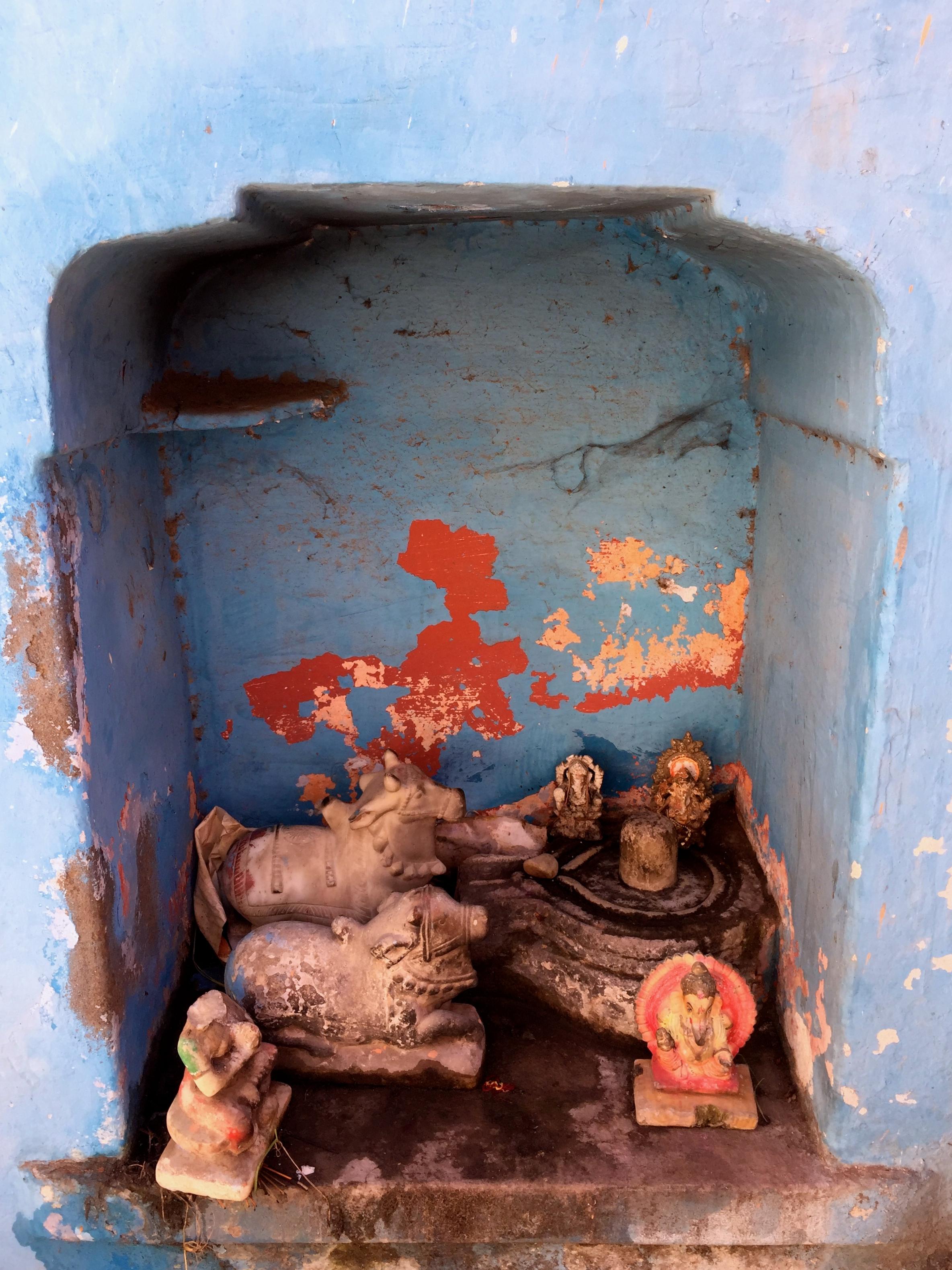Ganesha und heilige Kühe in einem Schrein in Pushkar