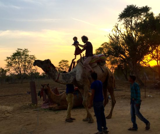 Wir sind auf Kamelsafari in der Wüste Thar und reiten ins Abendrot.